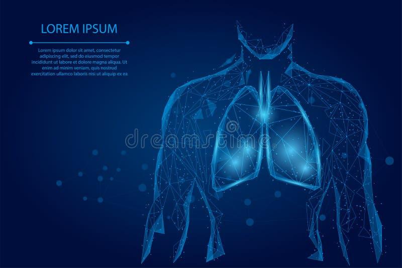 人体侧影健康肺连点低聚线框 库存例证
