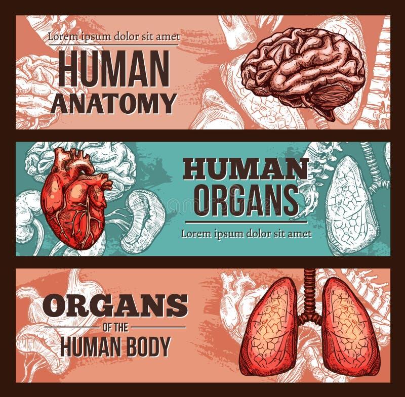 人体器官解剖学与身体局部的剪影横幅 皇族释放例证