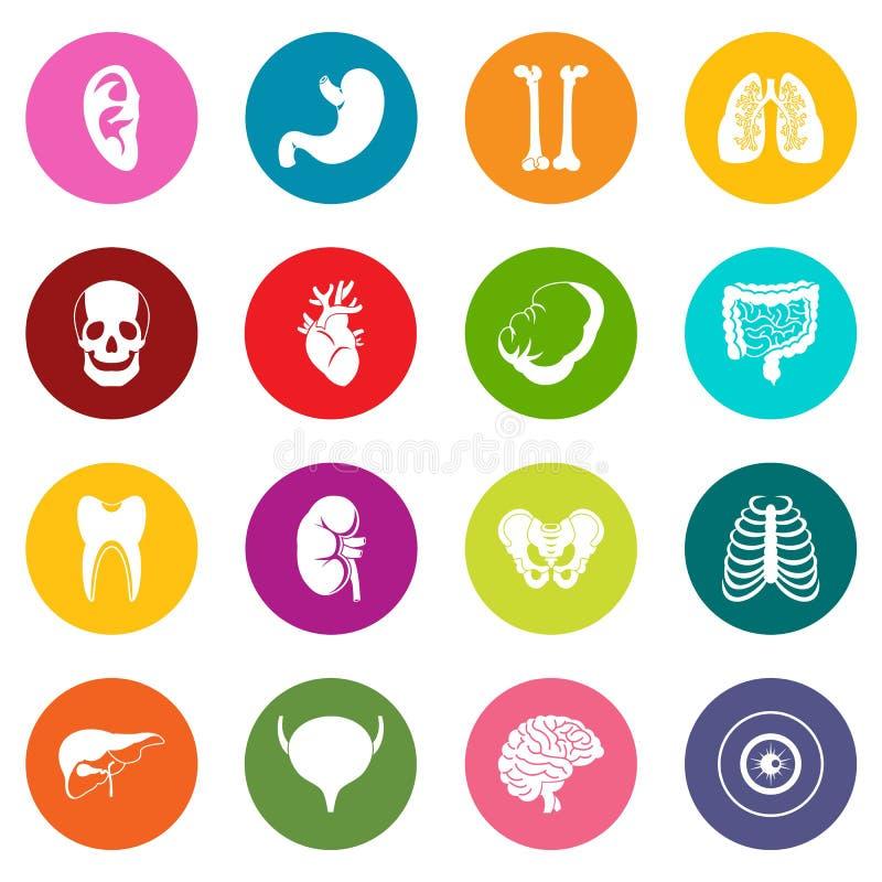 人体器官象许多彩色组 向量例证