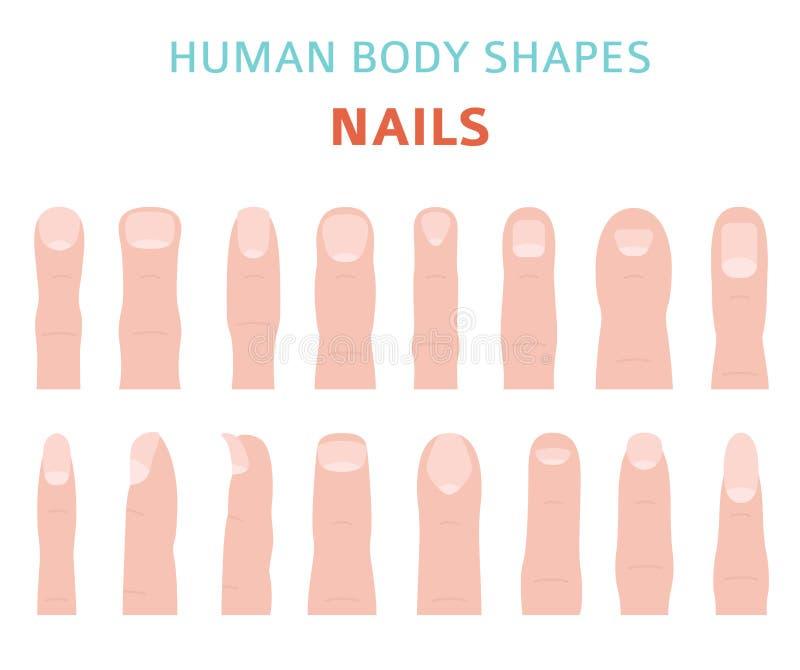 人体形状 手手指被设置的钉子类型 向量例证
