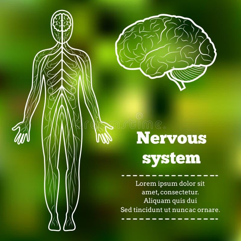 人体神经系统 免版税库存图片
