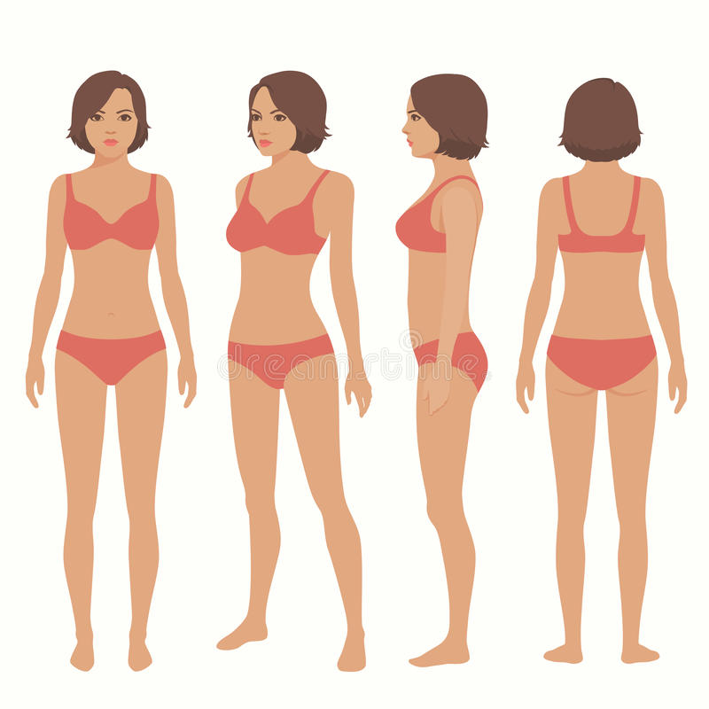人体解剖学,前面,后面,侧视图 向量例证