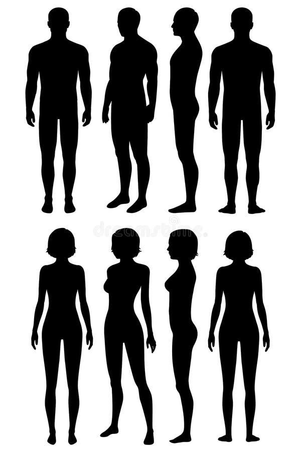 人体解剖学,身体剪影 向量例证