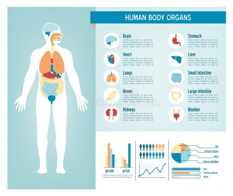 人体infographics 皇族释放例证