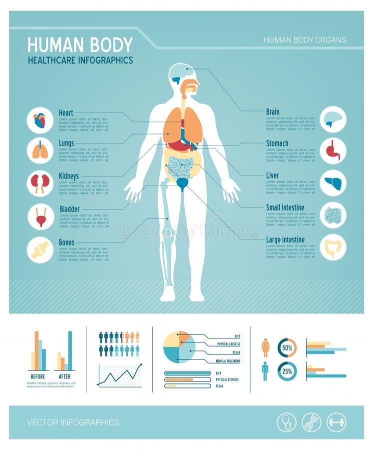 人体infographics 向量例证