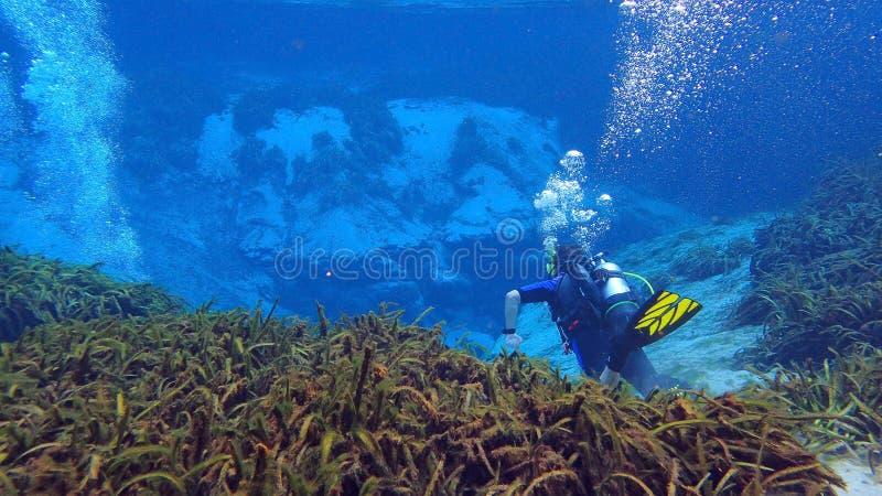 人佩戴水肺的潜水在春天在佛罗里达 库存图片