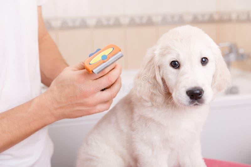人修饰他的狗在家 免版税库存图片