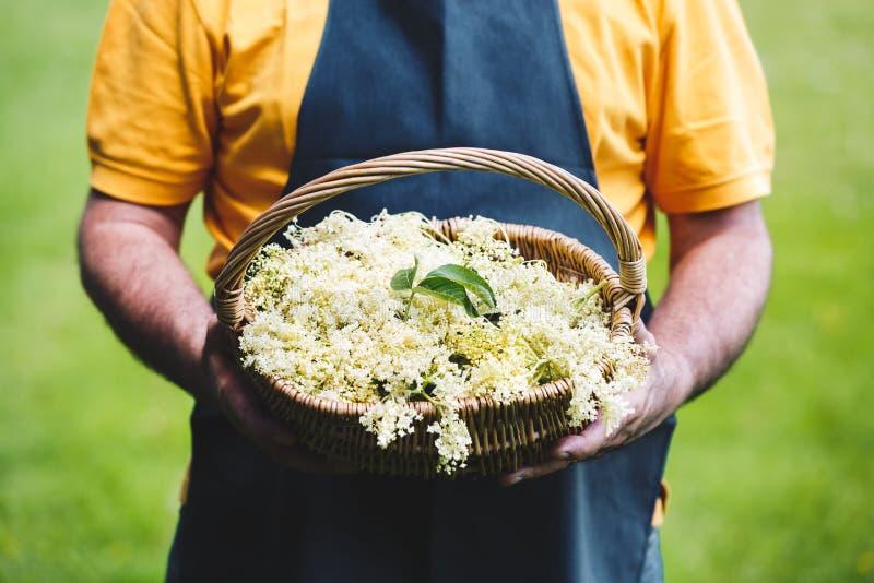 人充分藏品篮子被采摘的Elderflower 库存图片