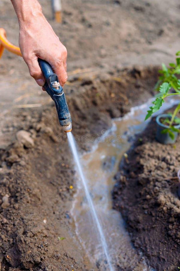 人农夫浇灌的蕃茄和胡椒幼木在庭院里户外 免版税图库摄影