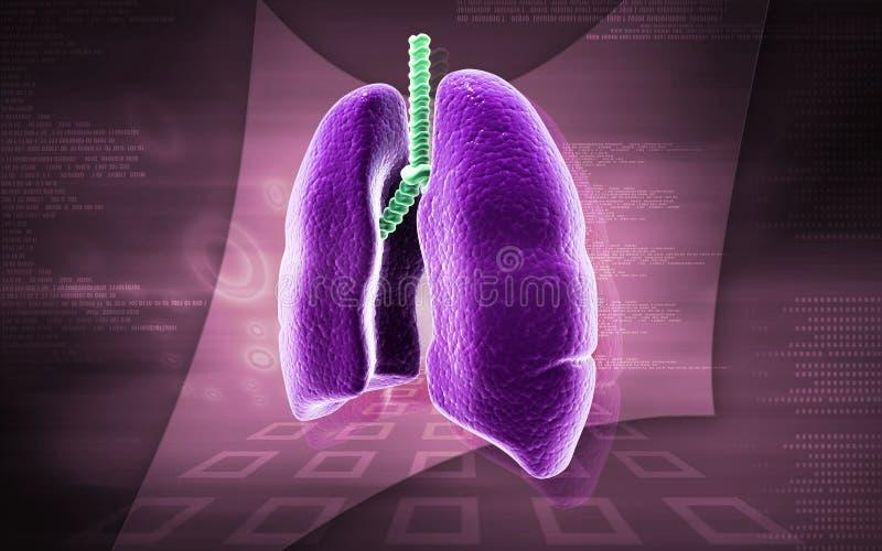 人力肺 库存例证