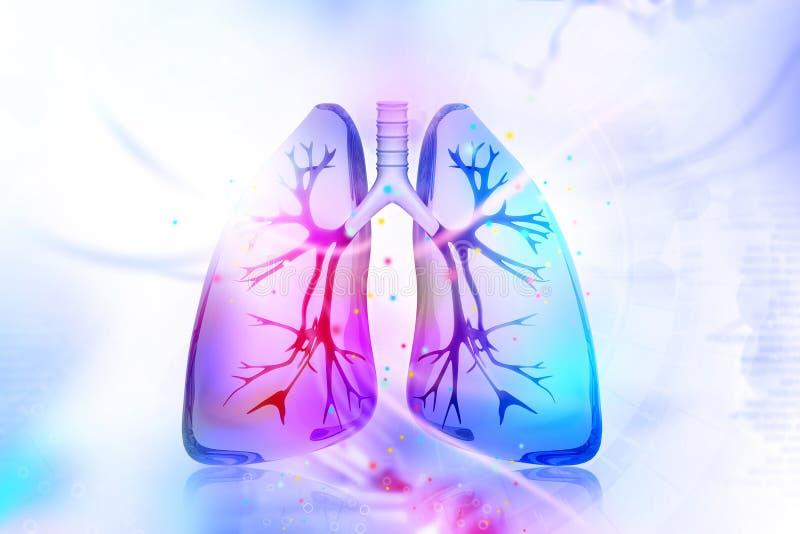 人力肺 向量例证