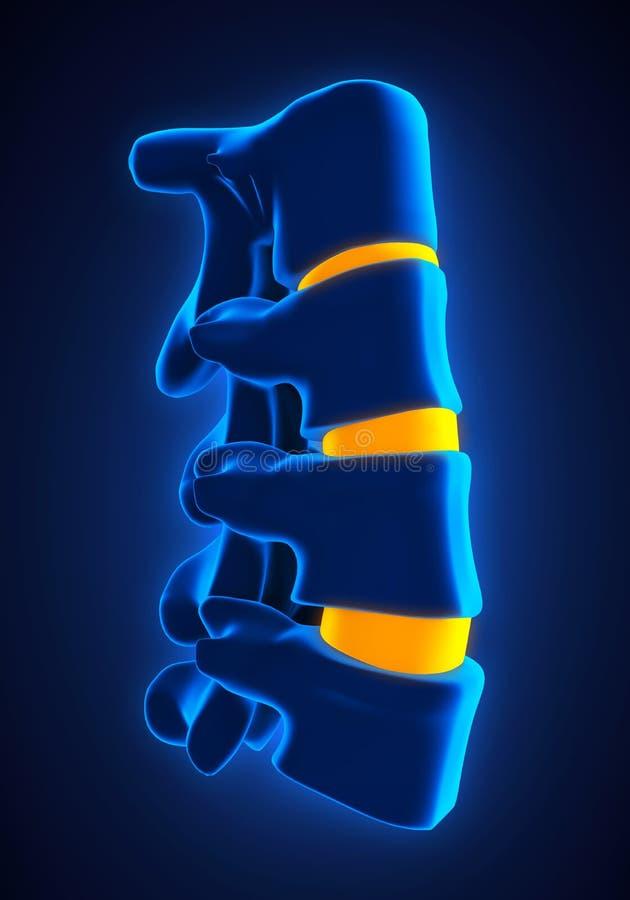 人力脊椎解剖学 向量例证
