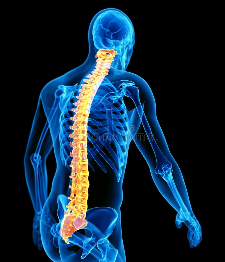 人力脊椎 库存例证