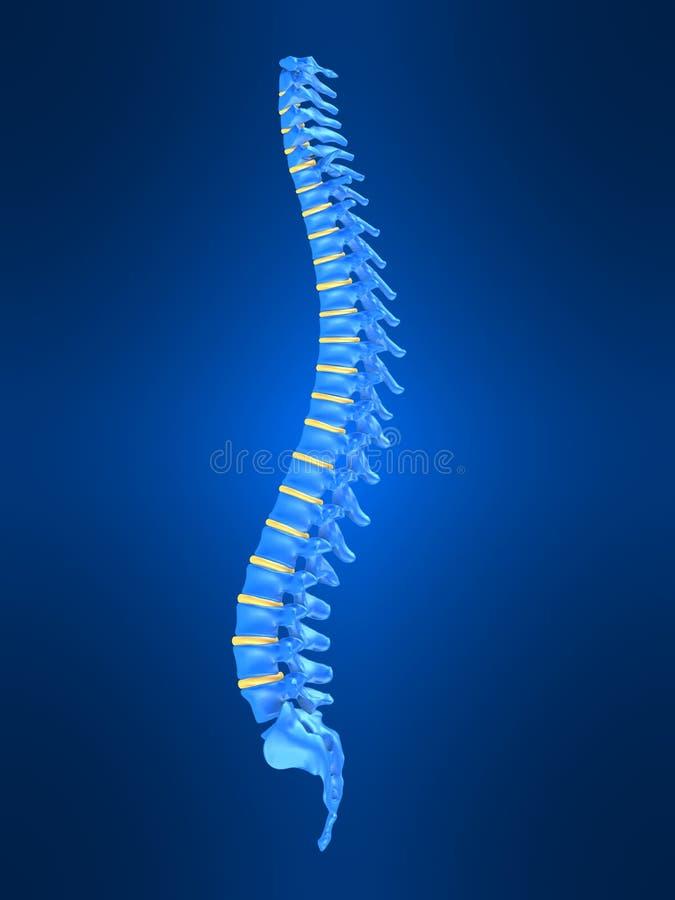 人力脊椎 向量例证