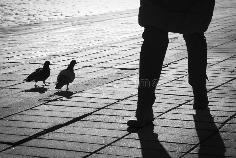人和两只鸽子剪影反对太阳 库存图片