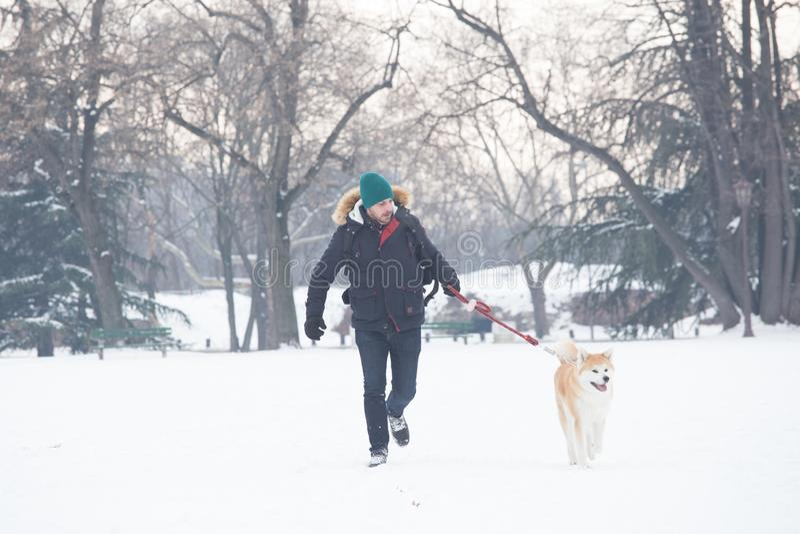 人和他美丽的狗走在雪的秋田 美丽的概念礼服女孩纵向佩带的空白冬天 免版税库存照片