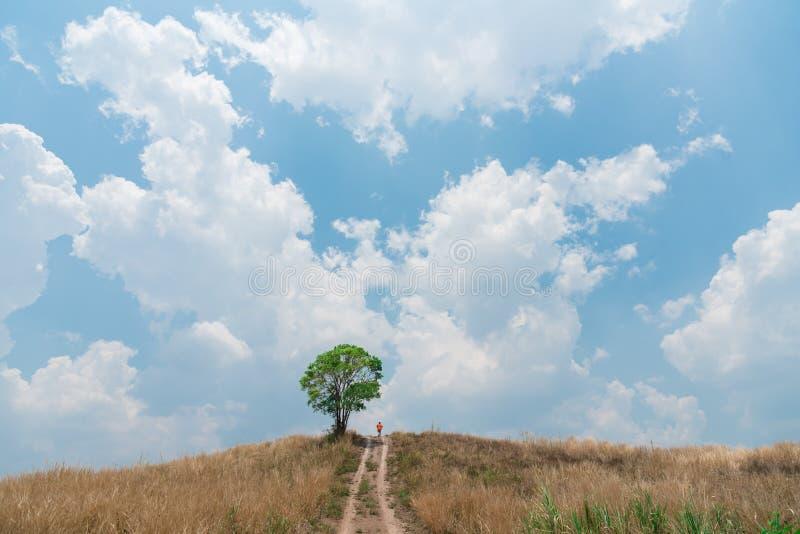 人和偏僻的树 免版税图库摄影