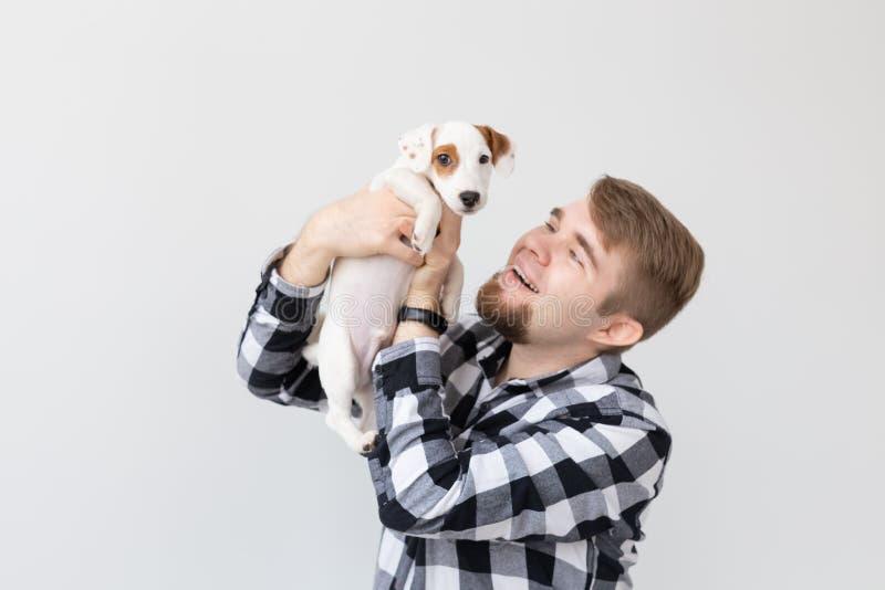 人和宠物概念-起重器罗素狗小狗画象的关闭坐人的手 库存图片