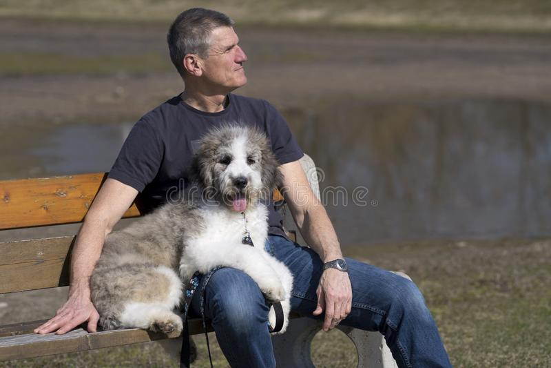 人和小狗在公园长椅 库存照片