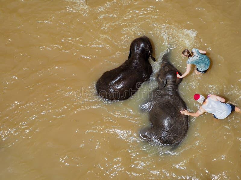 人和洗与mahout的妇女游人泰国大象浴Maesa大象阵营的,清迈,泰国 免版税库存照片