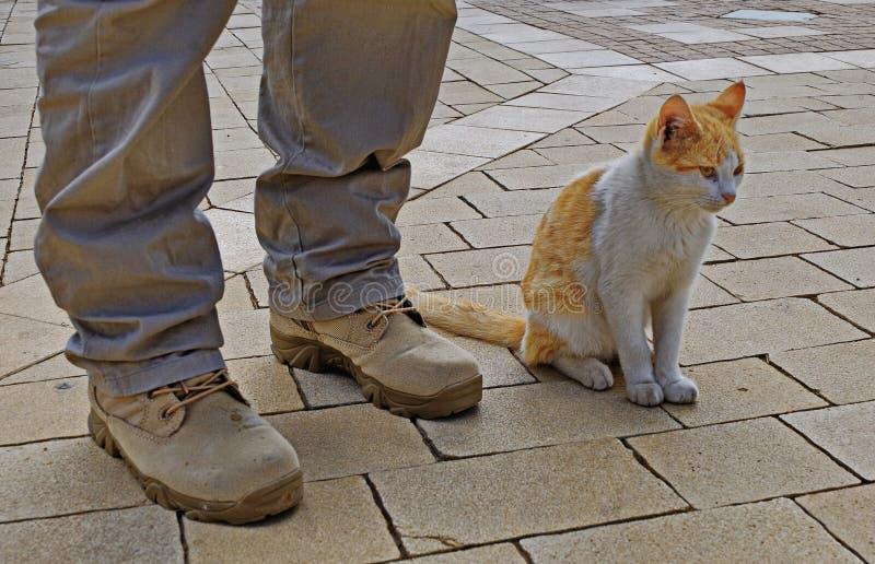 人和猫友谊 免版税图库摄影