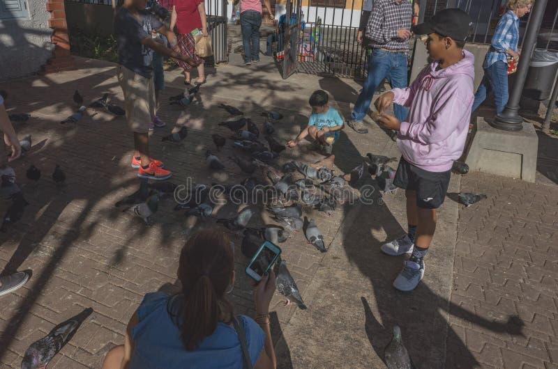 人哺养的pidgeons在老圣胡安 图库摄影