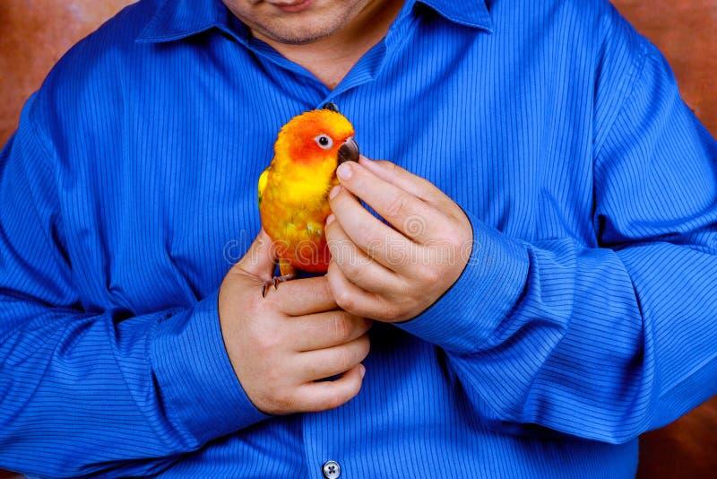 人喜欢使用与房子喜欢拿着五颜六色的鹦鹉的鹦鹉 库存图片