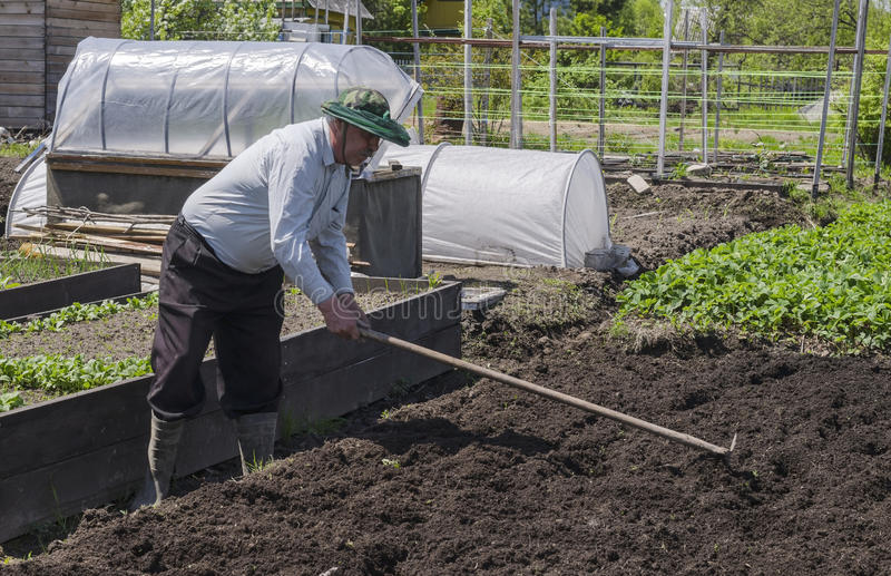 人在国家做种植的土豆孔 库存照片