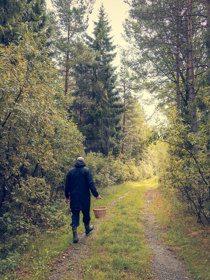 人在有篮子的一条森林公路走 库存图片