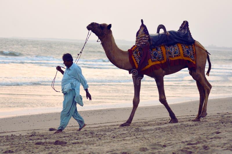人在海滩/Mandvi, Kutch,印度的凹道骆驼 地方人 免版税库存照片