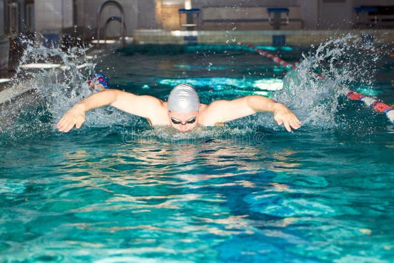 人在游泳水池蝶泳游泳 库存图片