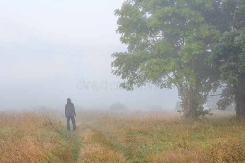 年轻人在草甸的有雾的早晨在秋天看大树 免版税库存图片
