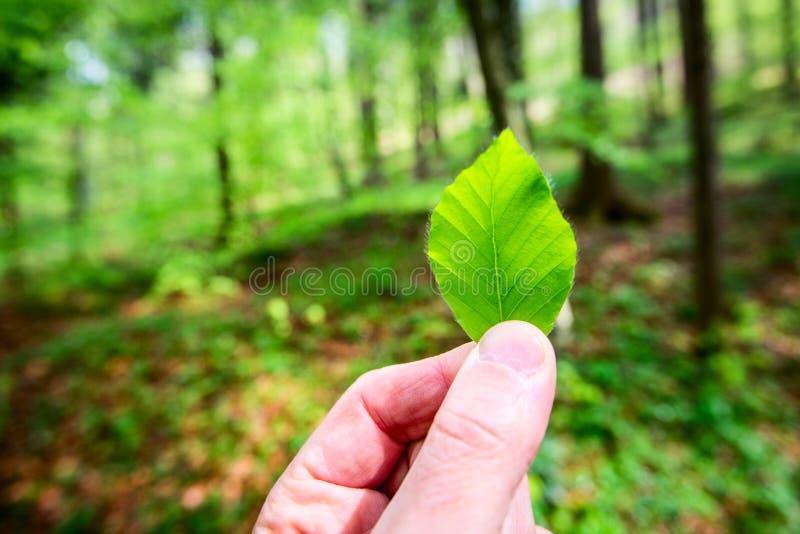 人在他的手上的拿着一片叶子图片