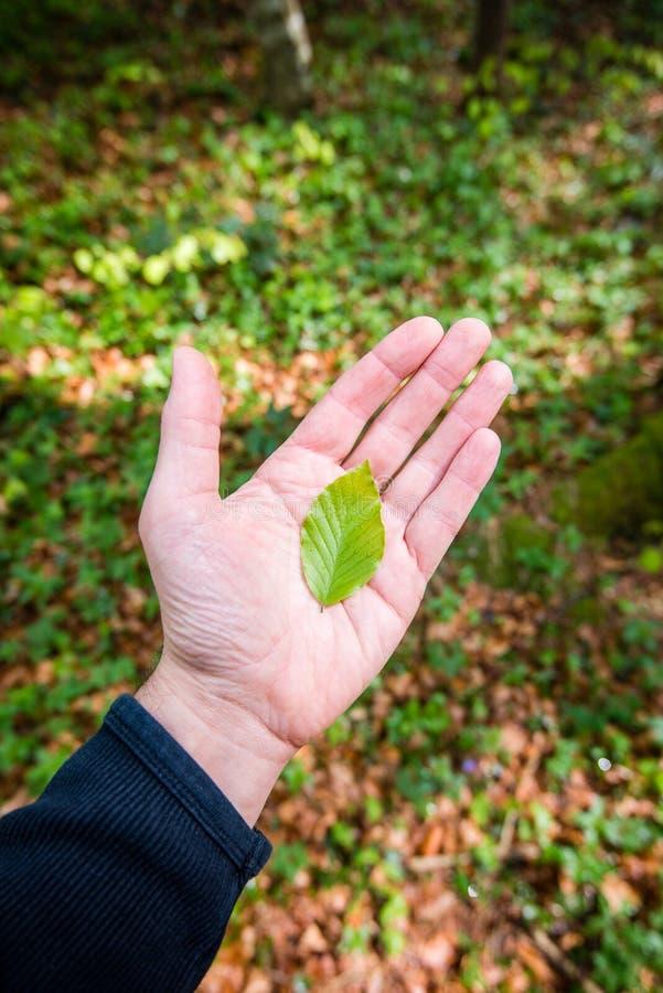 人在他的手上的拿着一片叶子. 醉汉, 生命力.图片