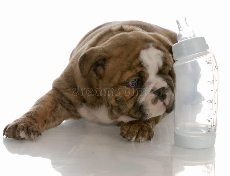 人工喂养小狗年轻人 免版税图库摄影
