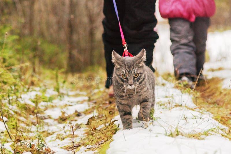 人带领在皮带的一只猫 免版税库存照片