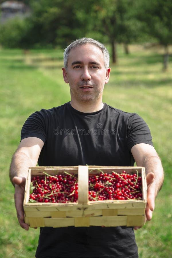 人微笑并且拿着篮子用红浆果 库存图片