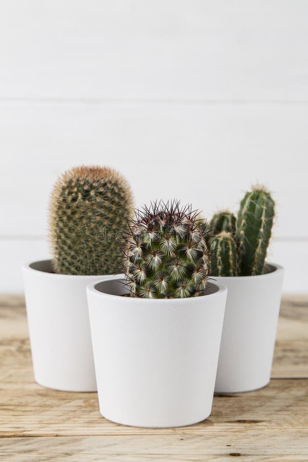 仙人掌在白色罐的植物三重奏 库存照片