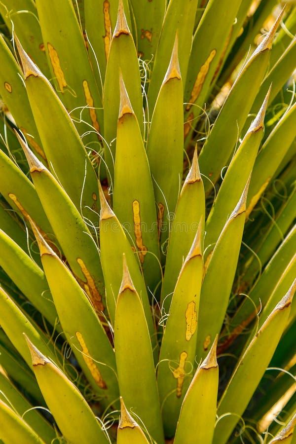 仙人掌棕榈叶 免版税库存照片