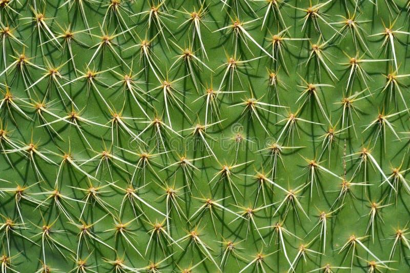 仙人掌植物在墨西哥沙漠 库存照片