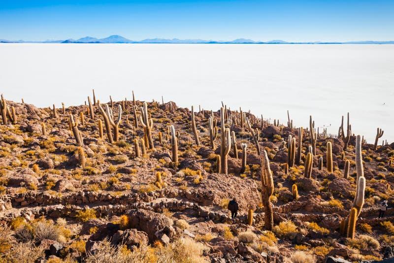 仙人掌海岛, Uyuni 库存照片