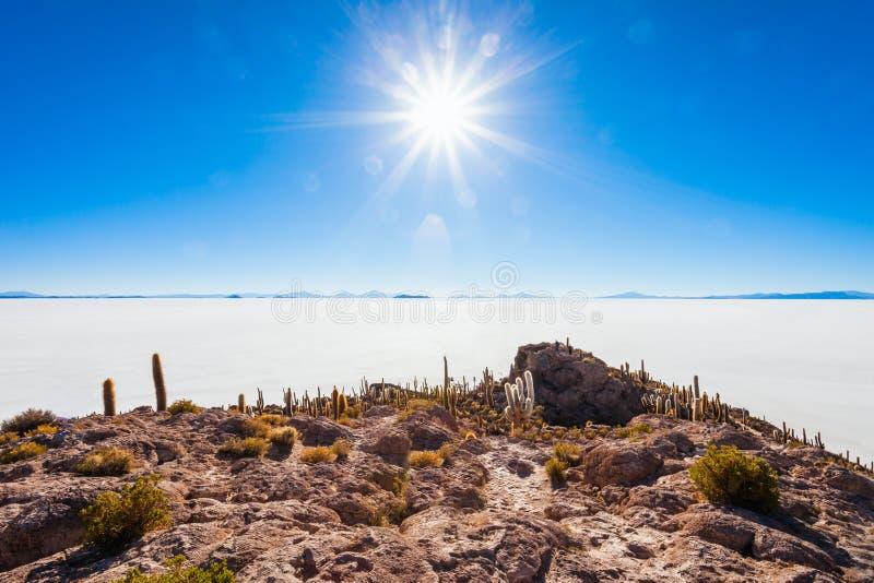 仙人掌海岛, Uyuni 免版税库存照片