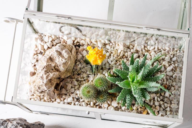 仙人掌特写镜头在一个玻璃玻璃容器的有自已生态系的 免版税库存图片