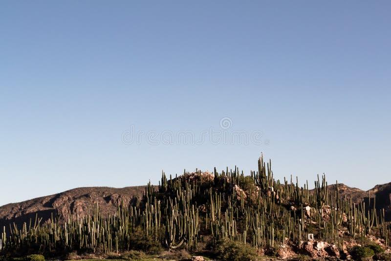 仙人掌盖了地面蛇的,墨西哥海岛 图库摄影