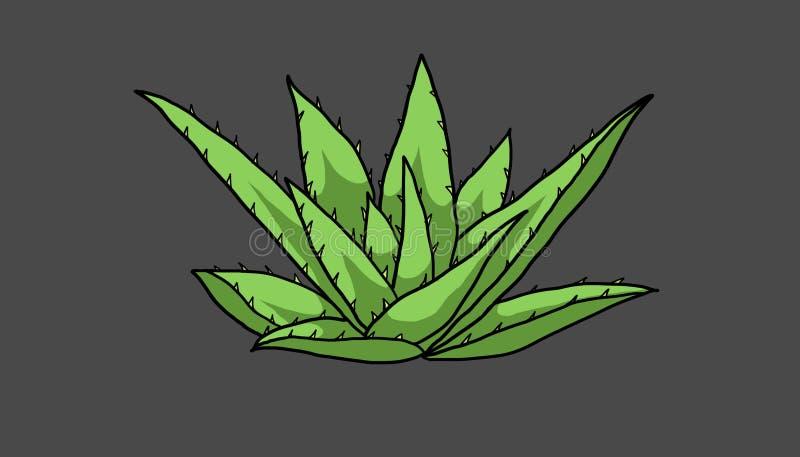 仙人掌科家庭的植物命名了芦荟,例证 库存例证