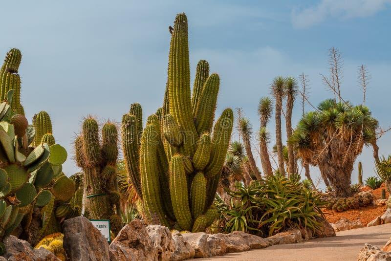 仙人掌风景 仙人掌墨西哥 仙人掌领域 Cactoo庭院 加州 免版税图库摄影