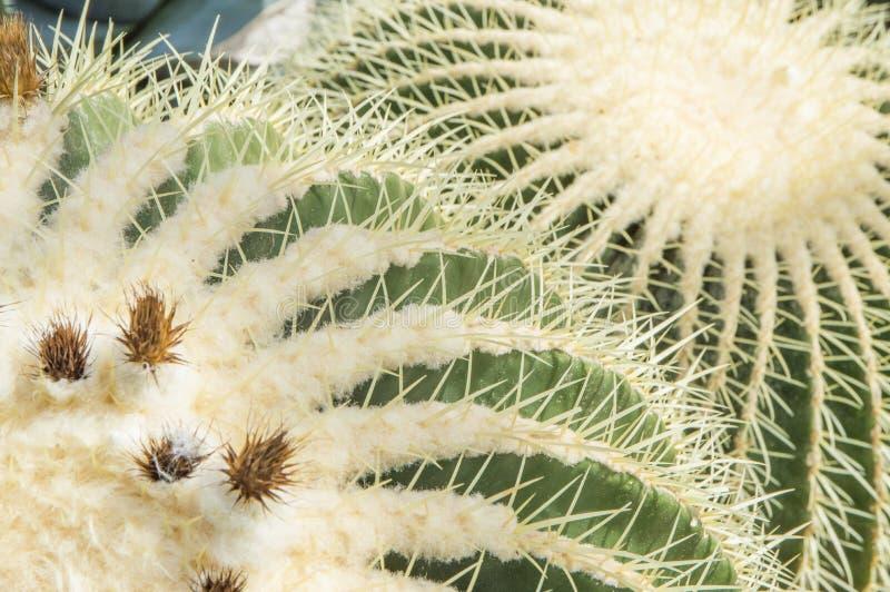 Download 仙人掌 库存图片. 图片 包括有 仙人掌, 自然, 沙漠, 模式, 墨西哥, 灌木, arizonian - 72369563