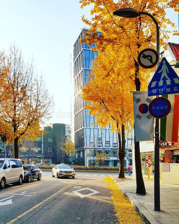 令人敬畏的射击在秋天韩国 库存照片