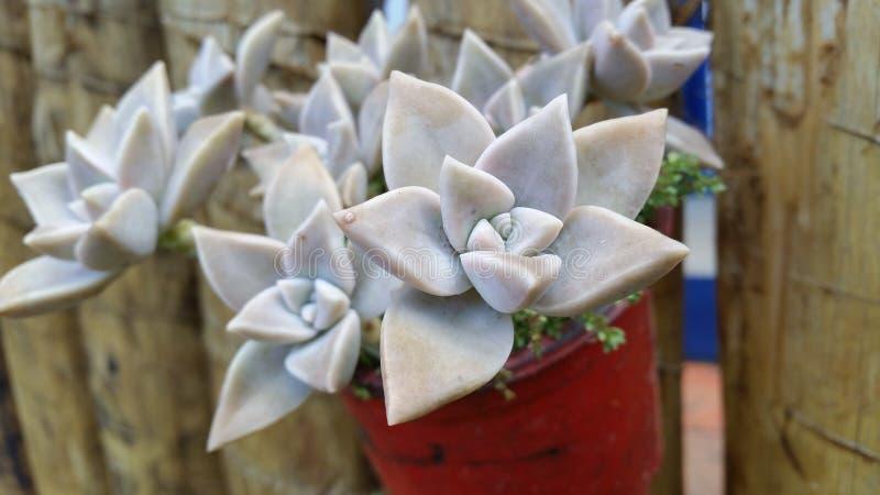 令人敬畏的花! 库存图片