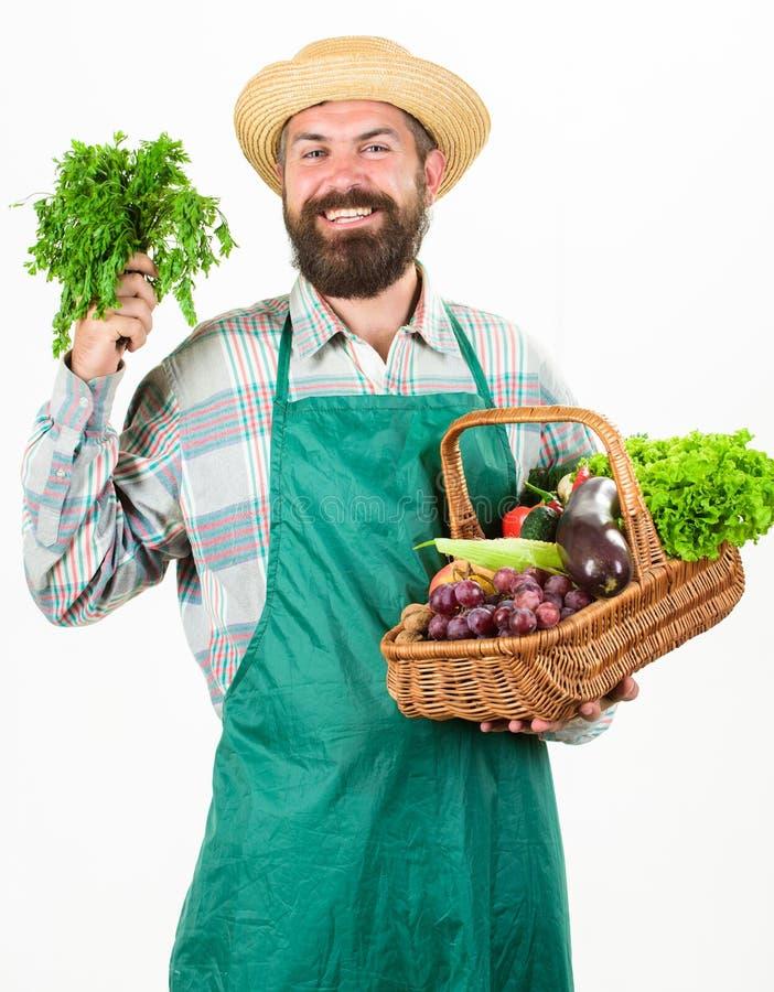 人有胡子的提出的菜被隔绝的白色背景 新鲜的有机菜柳条筐 行家花匠 免版税库存照片
